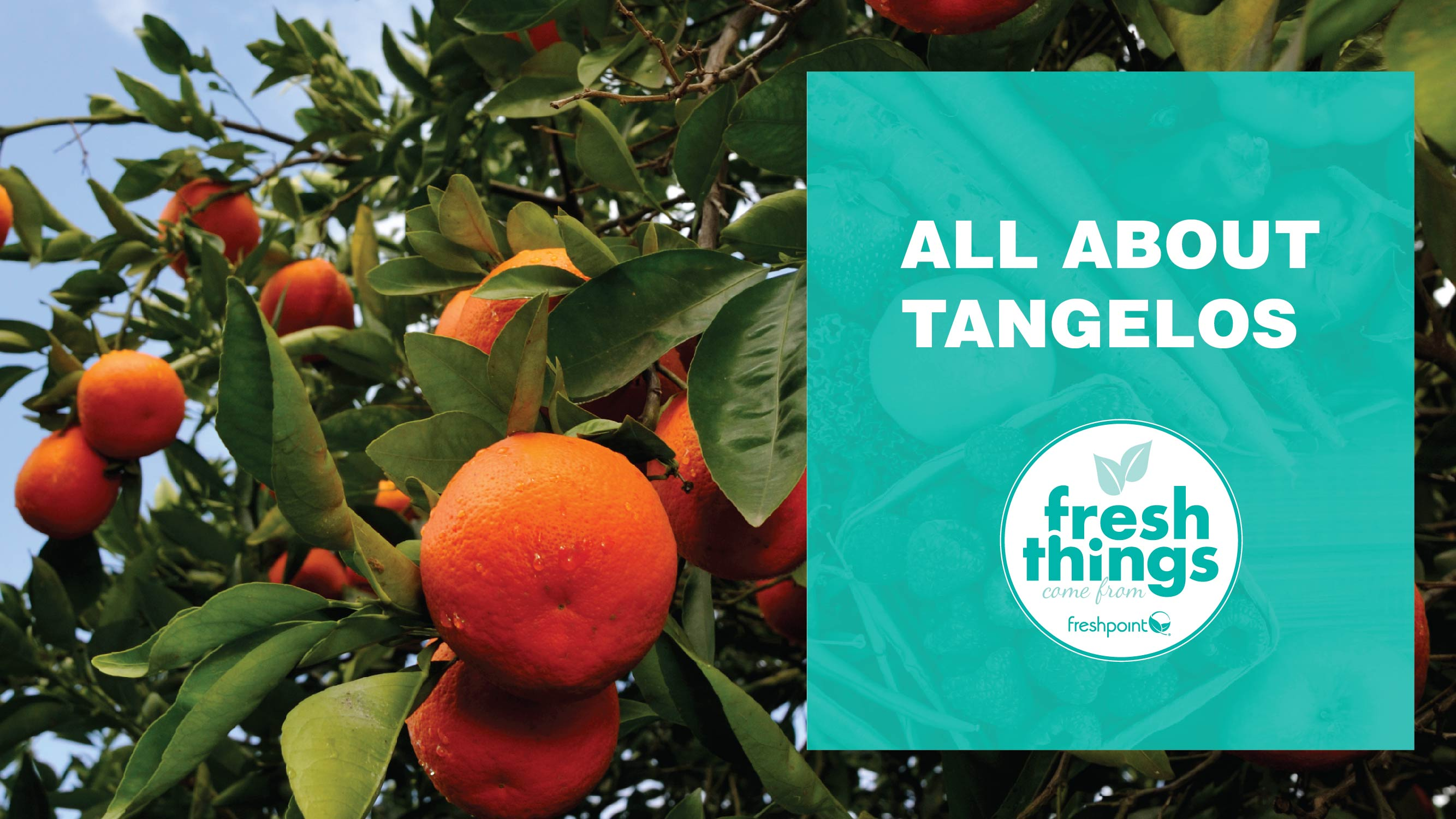 freshpoint-produce-tangelo