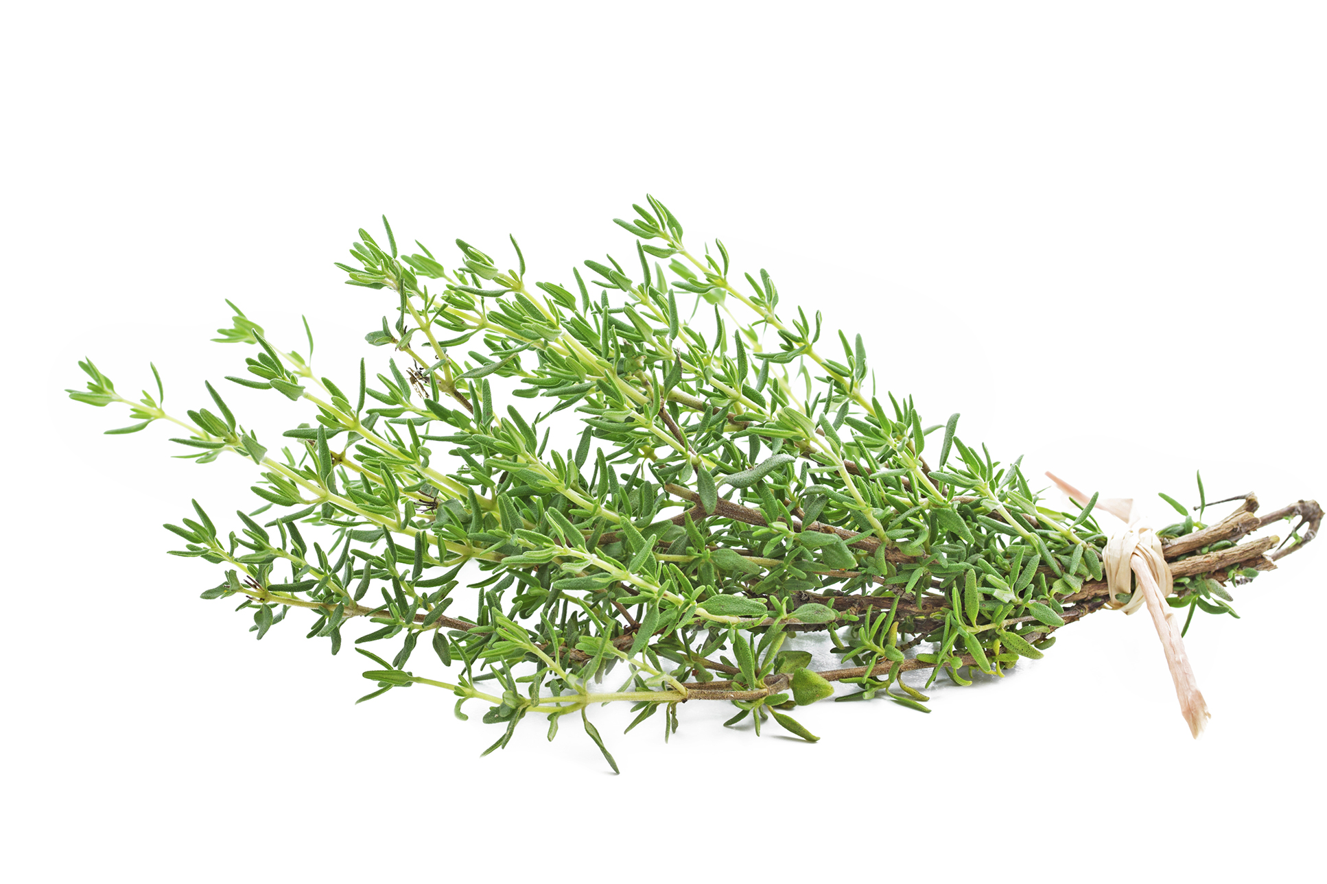 freshpoint-thyme