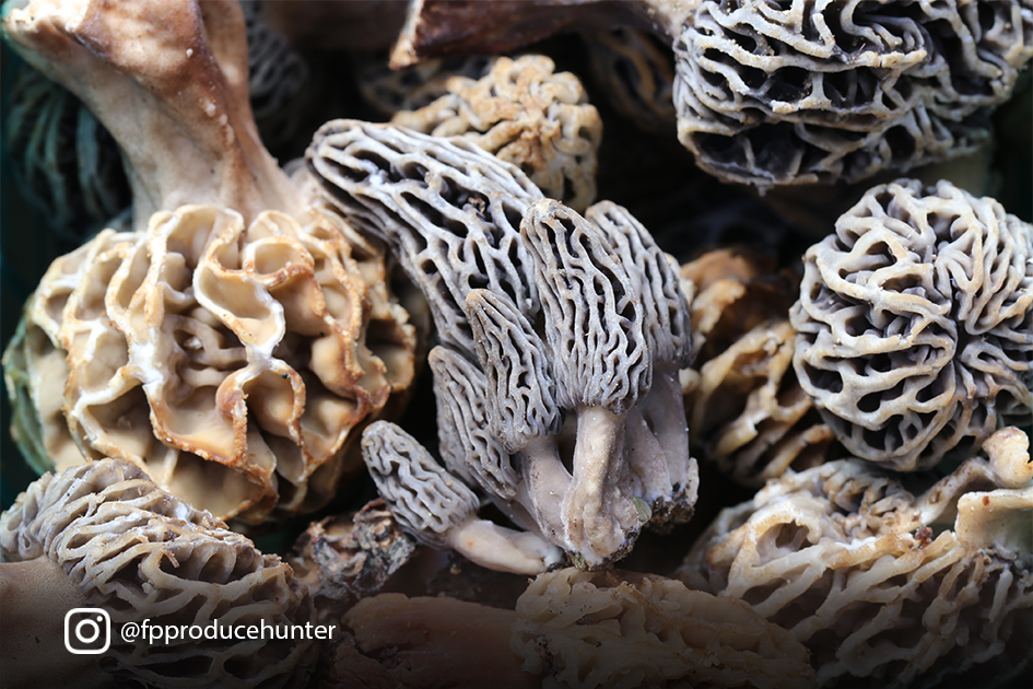 Morels! Image courtesy Karen Beverlin, vice president of Specialty Sales at The Produce Hunter.