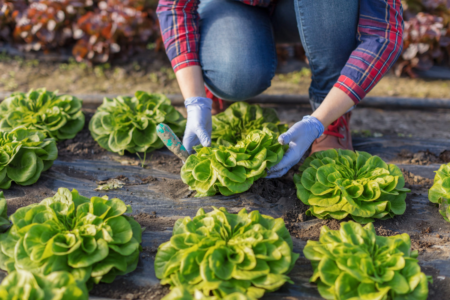 FreshPoint | GFSI: When your reputation is on the line, food safety